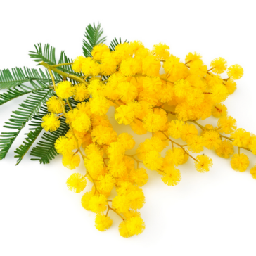 mimosa-donne-my-sweet-laura